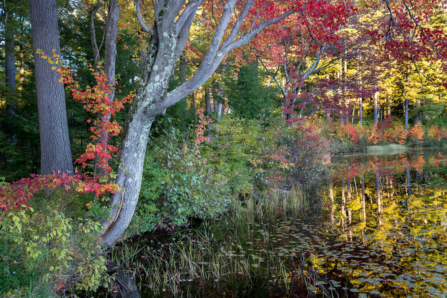 Fall Pond Reflections